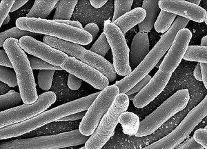 bacteriaecoli_med_hr